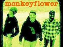 Image for monkey flower