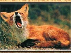 Image for The Yawns