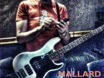 Marwood Mallard