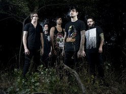 Image for Like Moths to Flames