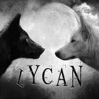 1385745490 black and white wolves lycan