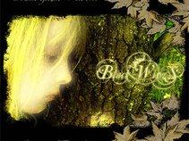 Black Wings (Ukr)