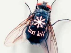 Last Kill