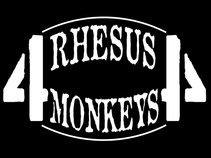 4 rHeSuS mOnKeYs