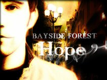 BAYSIDE FOREST