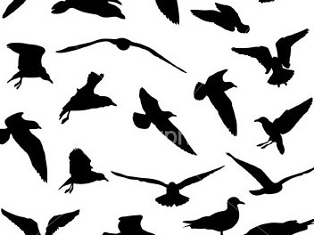 Image for Band Of Seagulls