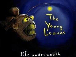 Image for The Young Leaves