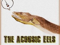 The Acoustic Eels
