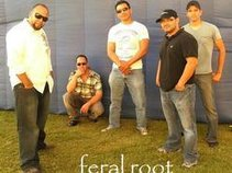 feral root