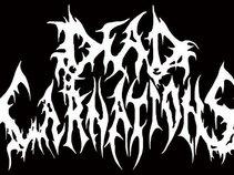 DEAD CARNATIONS