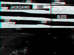 Image for Jackdaws