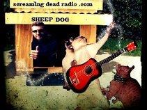 Sheep Dog and The Flea Fhukers
