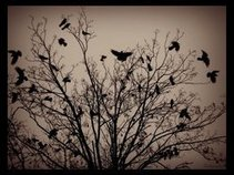The Crows Fly