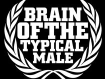 Brain Of The Typical Male