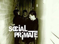 Image for Social Primate