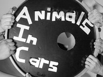 Animals in Cars