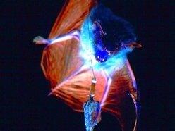 Bat Eats Moth