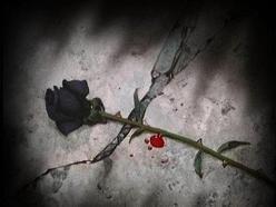 Crush The Rose