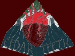 Cedar Teeth