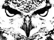 The Infamous Whyte Owl