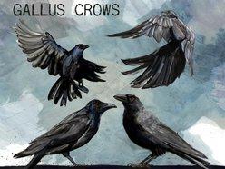 Gallus Crows