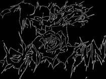 Roses Dawn