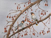 Cedar Waxwing and the Royal Canadian Cousins