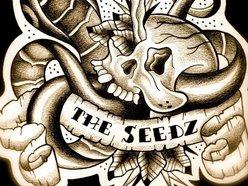 Image for The SeeDz