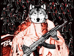 Image for From Dogs to Wolves