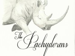 Image for The Pachyderms