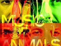 Image for Music For Animals