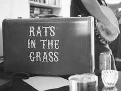 Image for Rats in the Grass