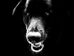 Image for Slipdown Dog
