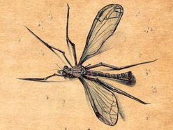 Image for Horsefly