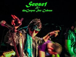Image for Sensei & the Carpet Sex Cobras
