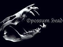 Opossum Head