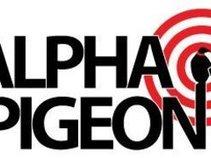 Alpha Pigeon