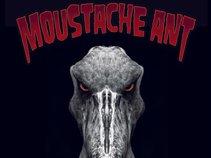 Moustache Ant