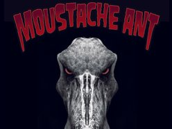 Image for Moustache Ant