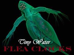 Tiny Water Flea Clocks