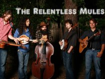 The Relentless Mules