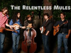 Image for The Relentless Mules