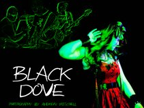Black Dove (UK)