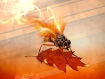 Fly By Fire