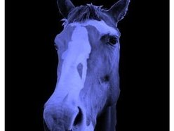 Image for Workhorse Blue