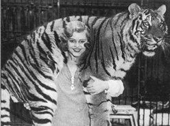 LadyBabyMiss and the Tigermen