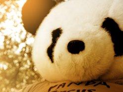 Image for Panda Circus
