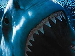 Image for Great White Shark