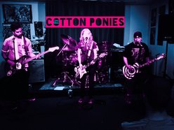 Image for The Cotton Ponies