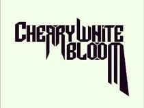Cherry White Bloom